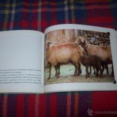Libros de segunda mano: LLUCMAJOR TERRA D'OVELLES. L'OVELLA ROJA MALLORQUINA. LLORENÇ PAYERAS.PREGÓ FIRES 2002.. Lote 108696276