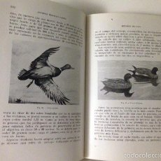 Libros de segunda mano: MORALES: MÉTODOS DE CAZA. (ARMAS PERROS.CAZA EN LA LLANURA Y MONTAÑA. PEQUEÑAS AVES. AVES DE RAPIÑA. Lote 57740565
