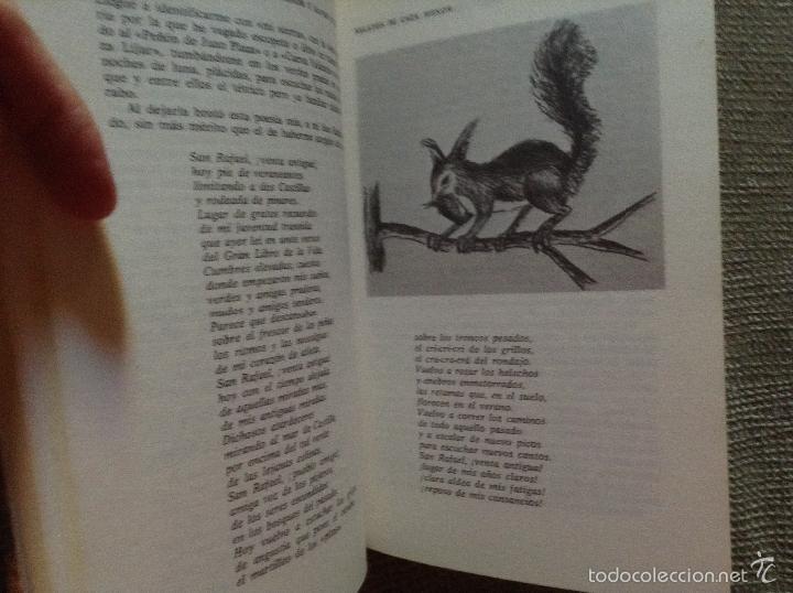 Libros de segunda mano: CAZAS MENOR Y MAYOR EN ESPAÑA FRANCISCO JOSE RUEDA CASSINELLO - Foto 2 - 57816002