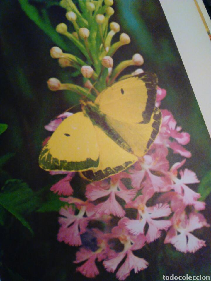 Libros de segunda mano: Maravillas de la naturaleza Walt Disney ediciones gaisa s.l. - Foto 2 - 65670181