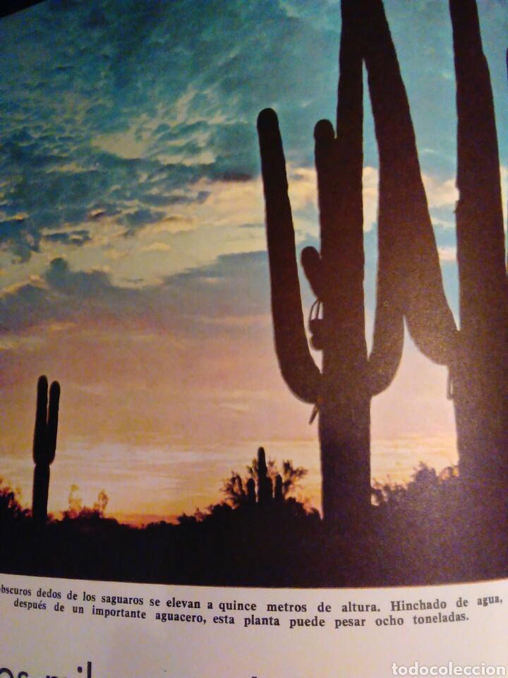 Libros de segunda mano: Maravillas de la naturaleza Walt Disney ediciones gaisa s.l. - Foto 3 - 65670181