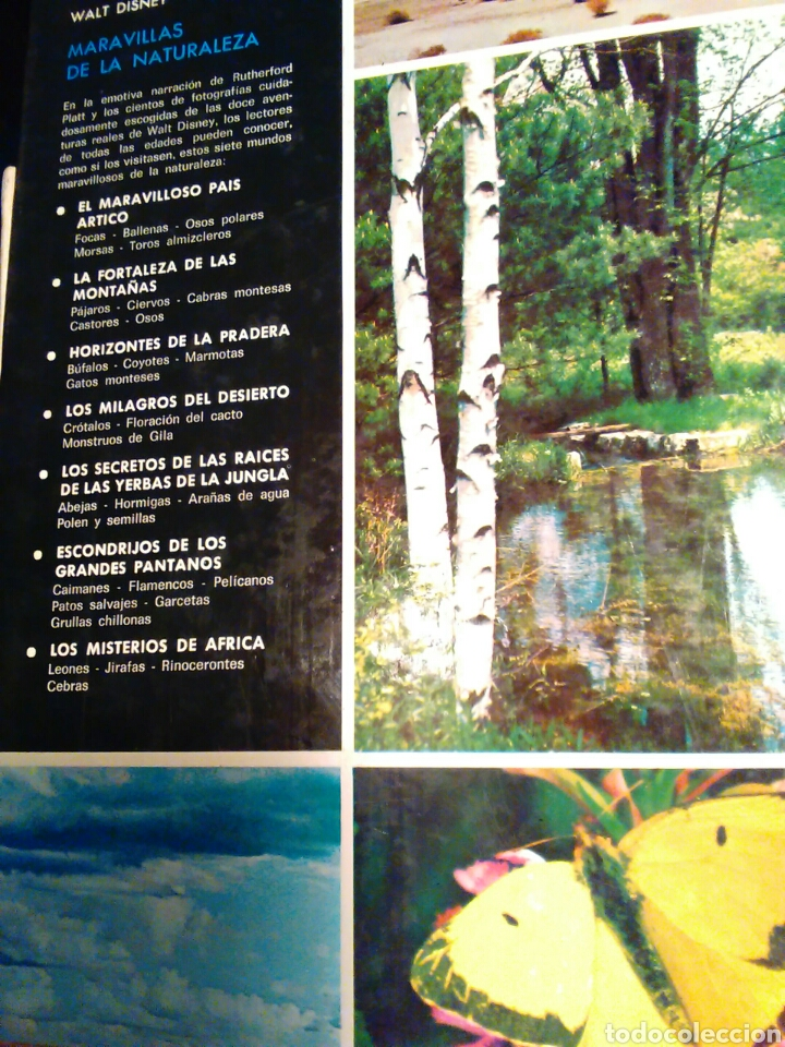 Libros de segunda mano: Maravillas de la naturaleza Walt Disney ediciones gaisa s.l. - Foto 4 - 65670181