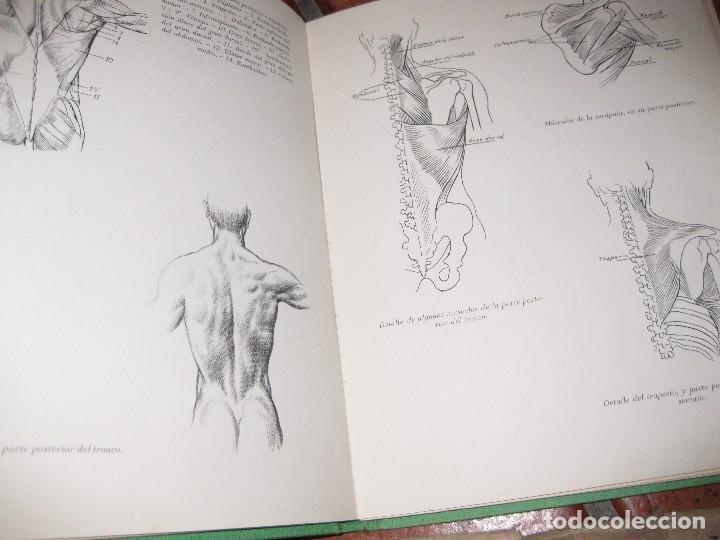 Libros de segunda mano: lote 3 libro dibujo anatomia 1969 . laminas dibujo nº6 . figura en el deporte 1966 emilio freixas - Foto 2 - 73698419