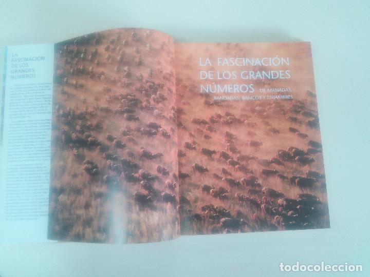 Libros de segunda mano: FASCINACION DE LOS GRANDES NUMEROS.MANADAS, BANDADA, BANCOS, ENJAMBRES-1998-1º ED-TAPA DURA - Foto 2 - 74000419