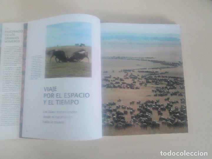 Libros de segunda mano: FASCINACION DE LOS GRANDES NUMEROS.MANADAS, BANDADA, BANCOS, ENJAMBRES-1998-1º ED-TAPA DURA - Foto 3 - 74000419