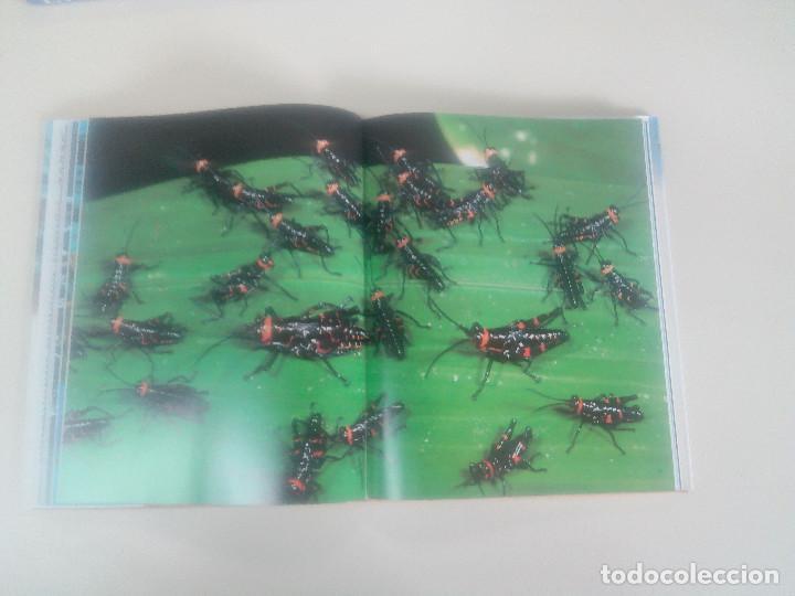 Libros de segunda mano: FASCINACION DE LOS GRANDES NUMEROS.MANADAS, BANDADA, BANCOS, ENJAMBRES-1998-1º ED-TAPA DURA - Foto 5 - 74000419