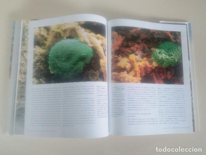 Libros de segunda mano: FASCINACION DE LOS GRANDES NUMEROS.MANADAS, BANDADA, BANCOS, ENJAMBRES-1998-1º ED-TAPA DURA - Foto 10 - 74000419