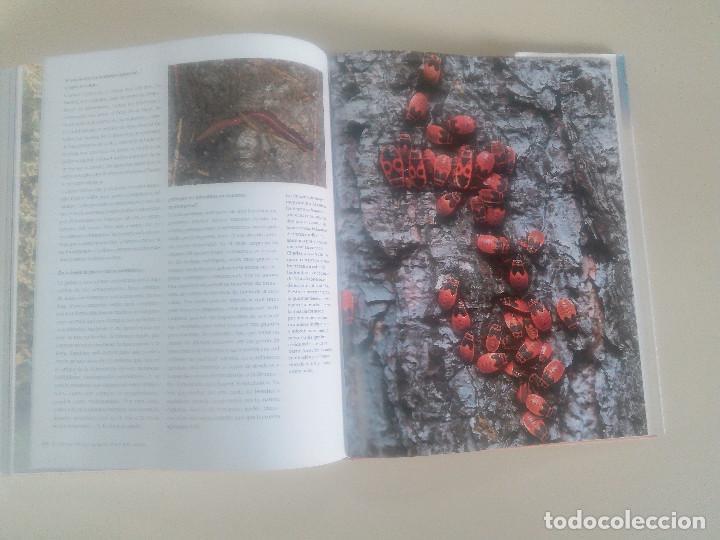 Libros de segunda mano: FASCINACION DE LOS GRANDES NUMEROS.MANADAS, BANDADA, BANCOS, ENJAMBRES-1998-1º ED-TAPA DURA - Foto 11 - 74000419