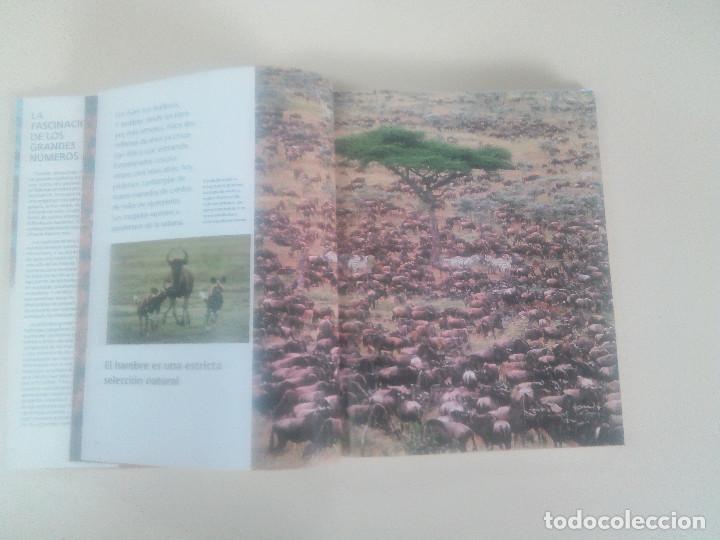 Libros de segunda mano: FASCINACION DE LOS GRANDES NUMEROS.MANADAS, BANDADA, BANCOS, ENJAMBRES-1998-1º ED-TAPA DURA - Foto 12 - 74000419
