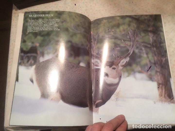 Libros de segunda mano: Antiguo libro de renos Wildlife of the Great of northwest años 90 - Foto 3 - 77593945