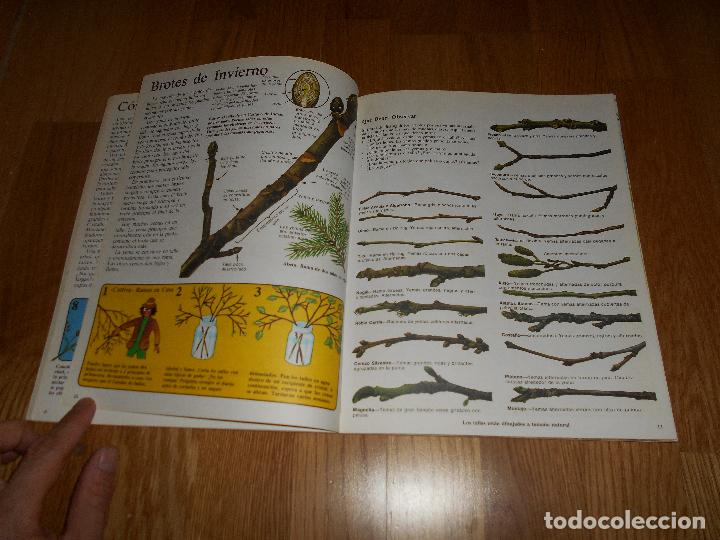 Libros de segunda mano: LA SENDA DE LA NATURALEZA ÁRBOLES Y HOJAS EDICIONES PLESA SM 1979 - Foto 4 - 81582148