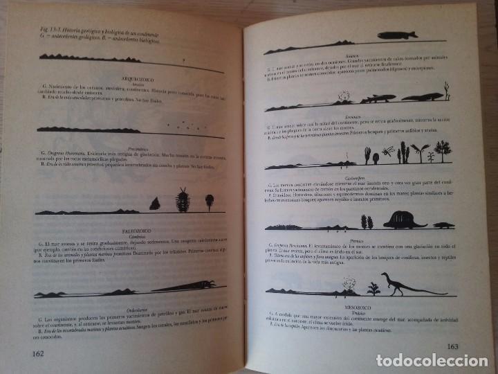 Libros de segunda mano: VINSON BROWN - MANUAL DEL NATURALISTA AFICIONADO - EDICIONES MARTINEZ ROCA 1987 - Foto 6 - 94872407