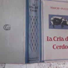 Libros de segunda mano: LA CRIA DEL CERDO,MARCHI-PUCCI,GUSTAVO GILI,SELECCION,ALIMENTACION, ENGORDE, PRODUCTOS Y ENFERMEDADE. Lote 97289487