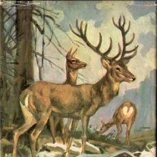Libros de segunda mano: ERNEST THOMPSON SETON : EL RASTRO DEL CIERVO (MOLINO ANIMALES Y SELVA, 1968). Lote 101463719