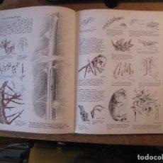 Libros de segunda mano: JEFFERY CAMP_DRAW_HOW TO MASTER THE ART (EN INGLÉS). Lote 102947727