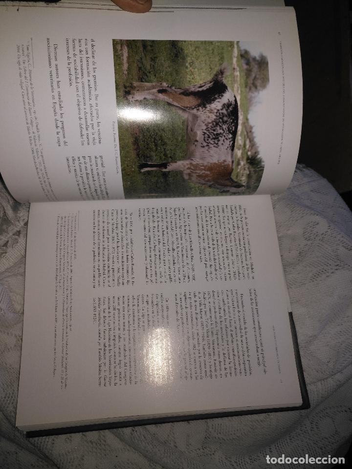 Libros de segunda mano: TRADICIÓN Y MODERNIDAD. HISTORIA COLEGIO OFICIAL DE VETERINARIOS CÁDIZ caballos cerdos burros perro - Foto 6 - 108432063