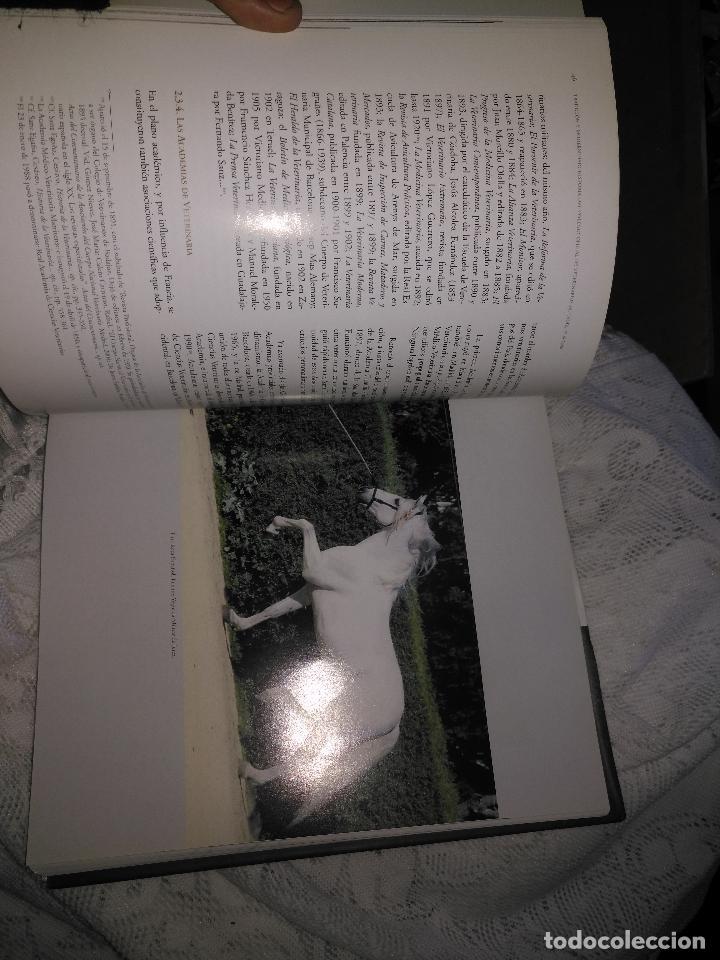 Libros de segunda mano: TRADICIÓN Y MODERNIDAD. HISTORIA COLEGIO OFICIAL DE VETERINARIOS CÁDIZ caballos cerdos burros perro - Foto 11 - 108432063