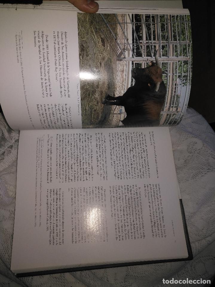 Libros de segunda mano: TRADICIÓN Y MODERNIDAD. HISTORIA COLEGIO OFICIAL DE VETERINARIOS CÁDIZ caballos cerdos burros perro - Foto 24 - 108432063