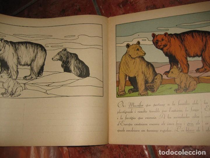 Libros de segunda mano: cuento para pintar y caligrafia . la zoologia en lescola 2 . gran formato historia natural - Foto 3 - 110027291