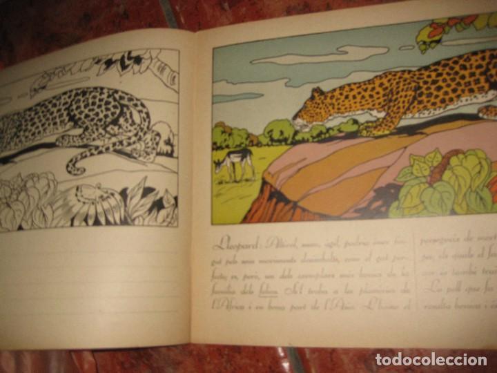 Libros de segunda mano: cuento para pintar y caligrafia . la zoologia en lescola 2 . gran formato historia natural - Foto 4 - 110027291