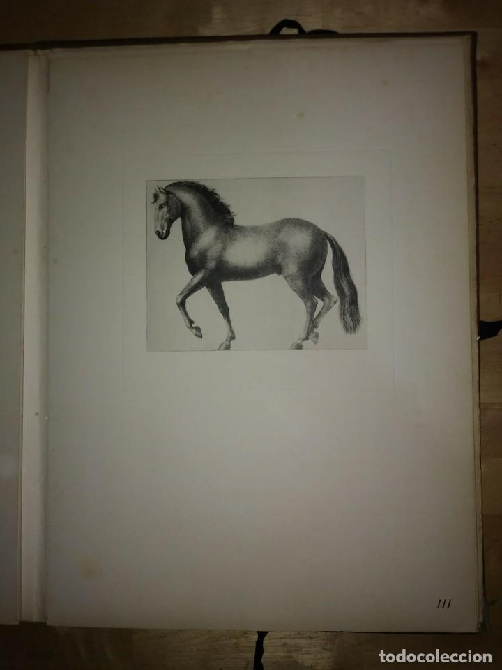 Libros de segunda mano: REAL PICADERO: Láminas de equitación grabadas en el siglo XVIII - hípica - caballos - equitación - Foto 38 - 117618115