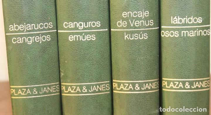 Libros de segunda mano: ANIMALES DEL MUNDO TOMOS 1, 2, 3 Y 4 - EDITADO PLAZA & JANES 1983 – ZOOLOGIA BIOLOGIA CIENCIA - Foto 2 - 124593863