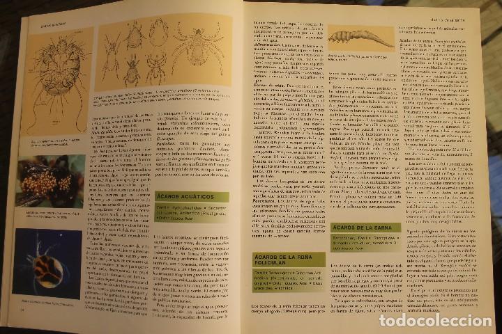Libros de segunda mano: ANIMALES DEL MUNDO TOMOS 1, 2, 3 Y 4 - EDITADO PLAZA & JANES 1983 – ZOOLOGIA BIOLOGIA CIENCIA - Foto 7 - 124593863
