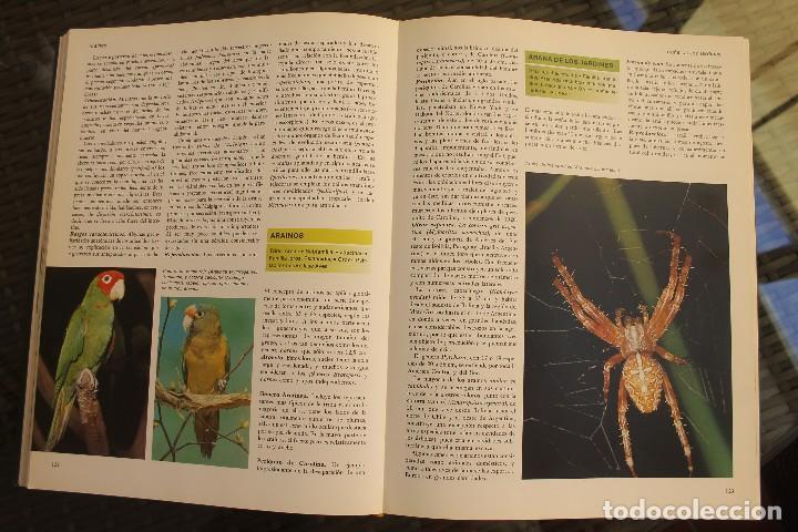 Libros de segunda mano: ANIMALES DEL MUNDO TOMOS 1, 2, 3 Y 4 - EDITADO PLAZA & JANES 1983 – ZOOLOGIA BIOLOGIA CIENCIA - Foto 9 - 124593863