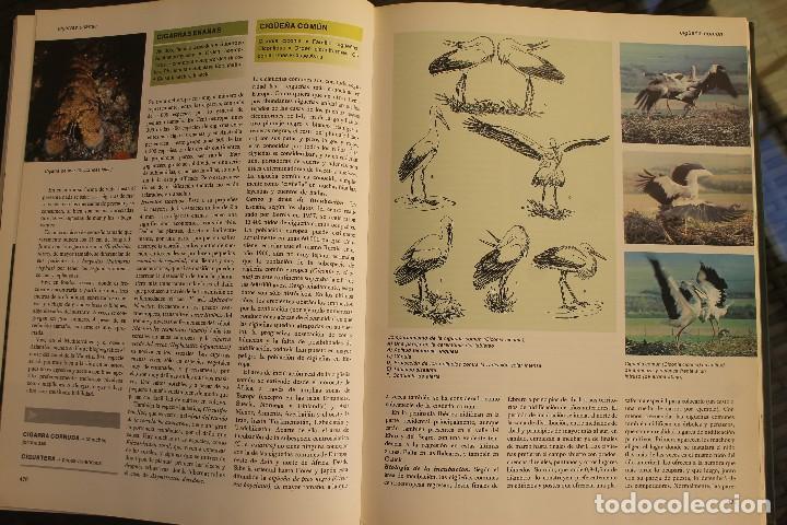 Libros de segunda mano: ANIMALES DEL MUNDO TOMOS 1, 2, 3 Y 4 - EDITADO PLAZA & JANES 1983 – ZOOLOGIA BIOLOGIA CIENCIA - Foto 10 - 124593863