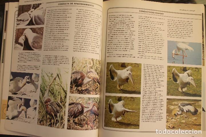Libros de segunda mano: ANIMALES DEL MUNDO TOMOS 1, 2, 3 Y 4 - EDITADO PLAZA & JANES 1983 – ZOOLOGIA BIOLOGIA CIENCIA - Foto 11 - 124593863