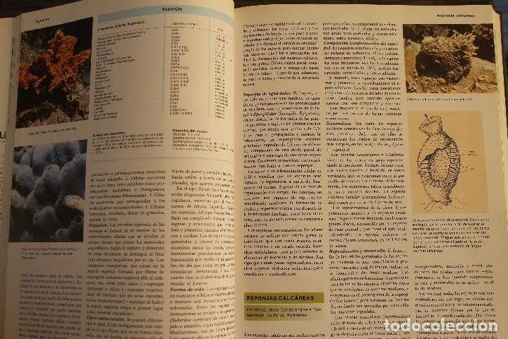 Libros de segunda mano: ANIMALES DEL MUNDO TOMOS 1, 2, 3 Y 4 - EDITADO PLAZA & JANES 1983 – ZOOLOGIA BIOLOGIA CIENCIA - Foto 12 - 124593863