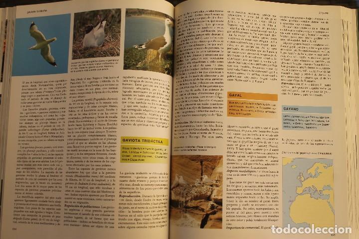 Libros de segunda mano: ANIMALES DEL MUNDO TOMOS 1, 2, 3 Y 4 - EDITADO PLAZA & JANES 1983 – ZOOLOGIA BIOLOGIA CIENCIA - Foto 14 - 124593863