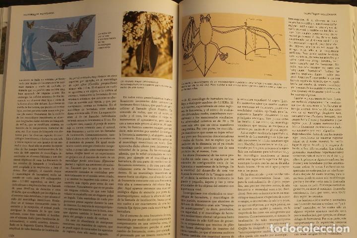 Libros de segunda mano: ANIMALES DEL MUNDO TOMOS 1, 2, 3 Y 4 - EDITADO PLAZA & JANES 1983 – ZOOLOGIA BIOLOGIA CIENCIA - Foto 16 - 124593863