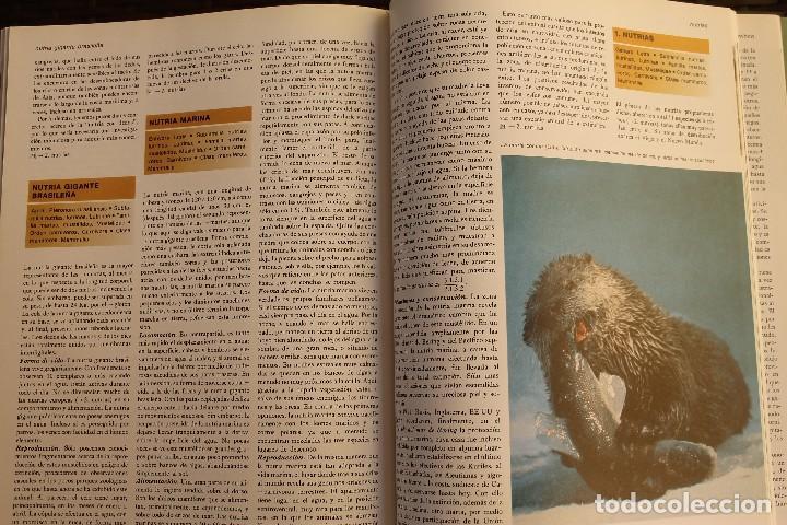 Libros de segunda mano: ANIMALES DEL MUNDO TOMOS 1, 2, 3 Y 4 - EDITADO PLAZA & JANES 1983 – ZOOLOGIA BIOLOGIA CIENCIA - Foto 17 - 124593863