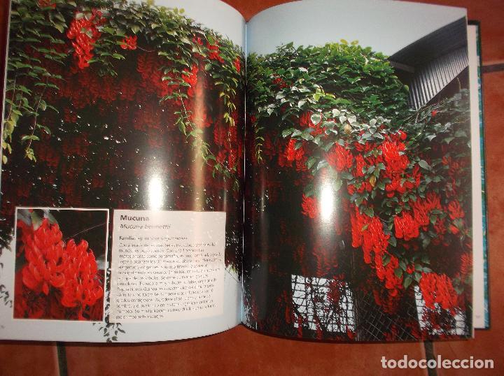 Libros de segunda mano: 101 plantas trepadoras,editorial euro best, todo muy buenas fotos fotos ,tapa acolchadas128 pagina - Foto 3 - 128320423
