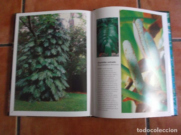 Libros de segunda mano: 101 plantas trepadoras,editorial euro best, todo muy buenas fotos fotos ,tapa acolchadas128 pagina - Foto 4 - 128320423