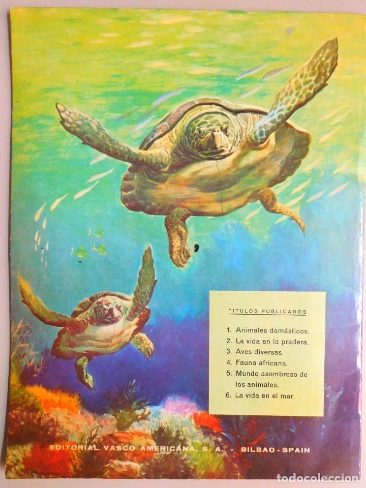Libros de segunda mano: MUNDO ASOMBROSO DE LOS ANIMALES, Nº 5 SERIE EL FABULOSO MUNDO DE LOS A...- ED. VASCO AMERICANA, 1972 - Foto 2 - 129222655