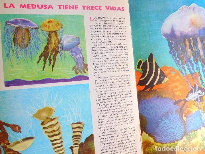 Libros de segunda mano: MUNDO ASOMBROSO DE LOS ANIMALES, Nº 5 SERIE EL FABULOSO MUNDO DE LOS A...- ED. VASCO AMERICANA, 1972 - Foto 3 - 129222655