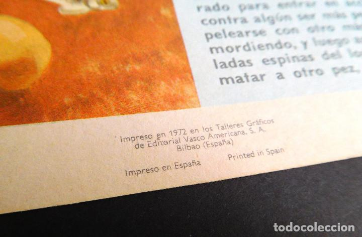 Libros de segunda mano: MUNDO ASOMBROSO DE LOS ANIMALES, Nº 5 SERIE EL FABULOSO MUNDO DE LOS A...- ED. VASCO AMERICANA, 1972 - Foto 4 - 129222655