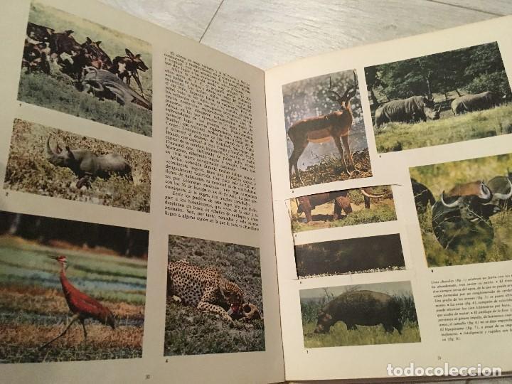 Libros de segunda mano: EL MUNDO DE WALT DISNEY - EDICIONES GAISA - Foto 2 - 130636238
