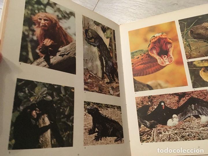 Libros de segunda mano: EL MUNDO DE WALT DISNEY - EDICIONES GAISA - Foto 6 - 130636238