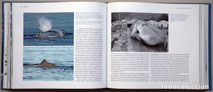Libros de segunda mano: Chimán. La pesca ballenera moderna en la península Ibérica. Alex Aguilar. Ballena. Cachalote.Galicia - Foto 4 - 195153005
