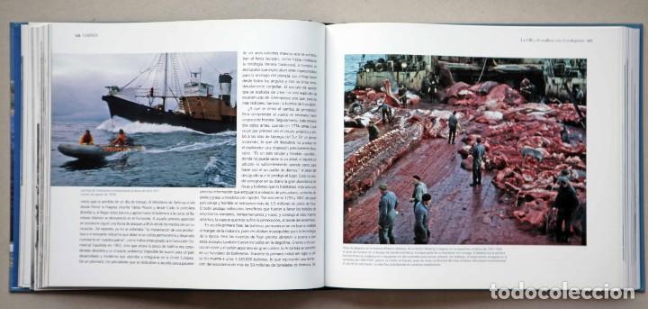 Libros de segunda mano: Chimán. La pesca ballenera moderna en la península Ibérica. Alex Aguilar. Ballena. Cachalote.Galicia - Foto 6 - 195153005