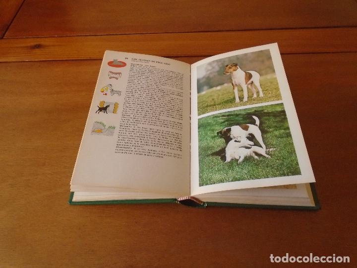 Libros de segunda mano: GUÍA DE PERROS (GINO PUGNETTI) . ED. GRIJALBO 1ª EDICIÓN 1981 - Foto 3 - 135272398