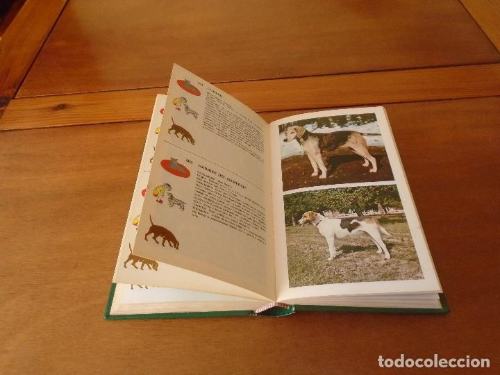 Libros de segunda mano: GUÍA DE PERROS (GINO PUGNETTI) . ED. GRIJALBO 1ª EDICIÓN 1981 - Foto 4 - 135272398