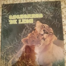 Libros de segunda mano: CACHORROS DE LEON --REFM3E3. Lote 139615554