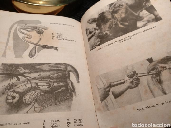 Libros de segunda mano: Cartilla pecuaria. Ganado vacuno - Foto 4 - 147219662