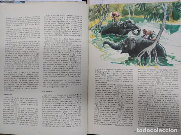 Libros de segunda mano: Panorama Juvenil de Selecciones del Reader's Digest, 1º edicion, 1967 - Foto 2 - 150986950