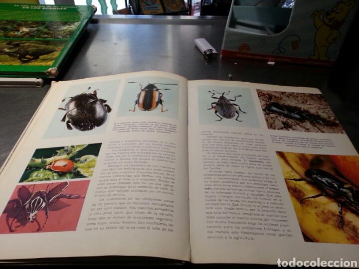 Libros de segunda mano: Vida secreta de Los animales. ( maravillas del mundo). - Foto 3 - 152153144