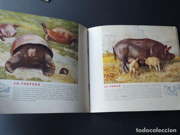 Libros de segunda mano: EL REINO ANIMAL PARANIÑOS / 5 EJEMPLARES / RAMON SOPENA - Foto 6 - 157912022